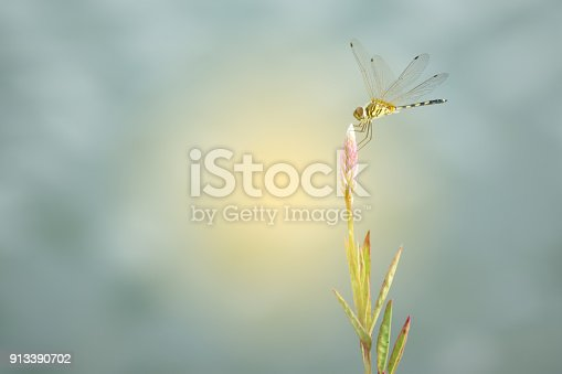green and yellow dragonfly  on the wild grass.