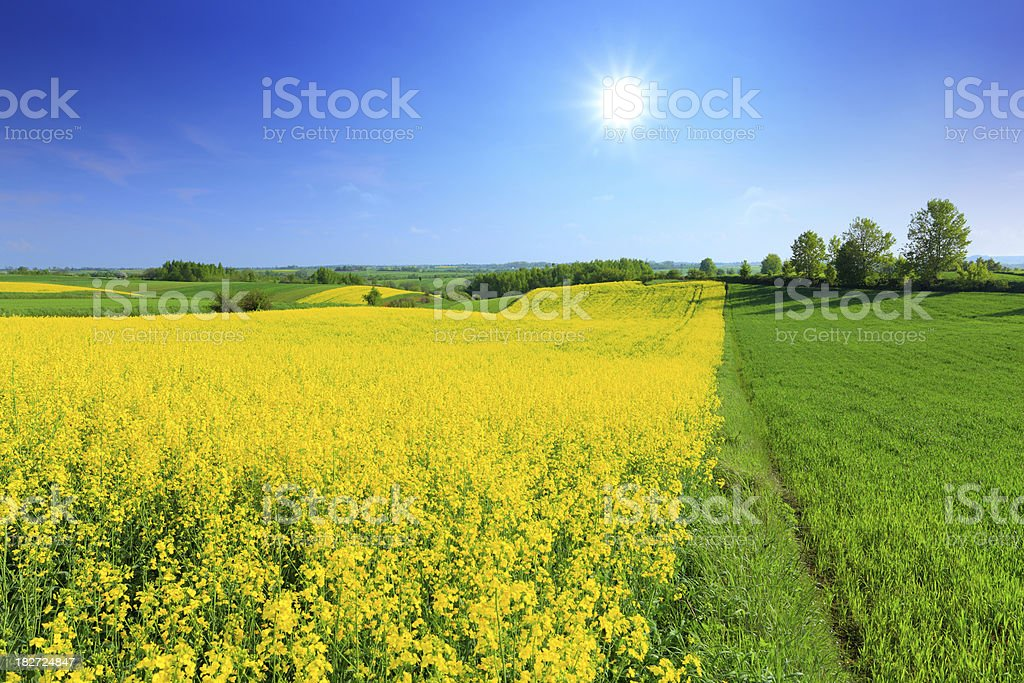 Green and yellow field - landscape stock photo