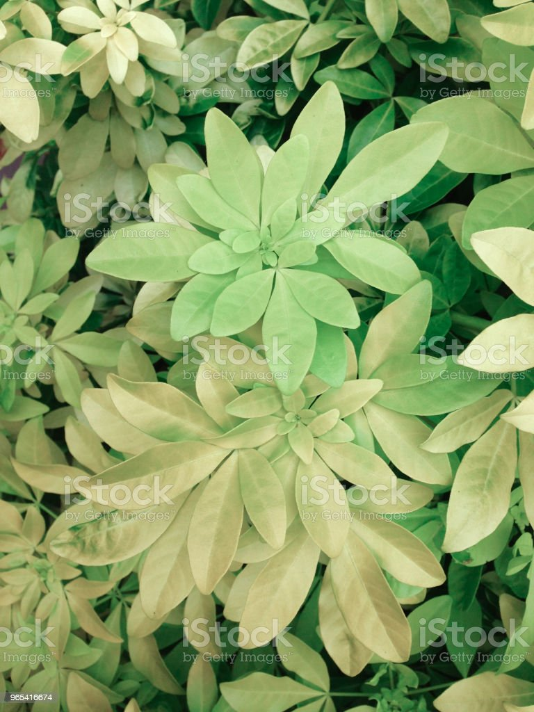 Green and yellow foliage royalty-free stock photo