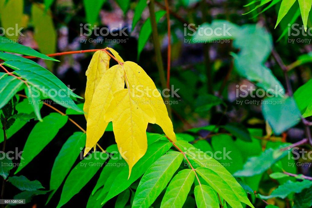 Sonbahar orman dalında yeşil ve sarı yapraklarda - Royalty-free Altın - Metal Stok görsel