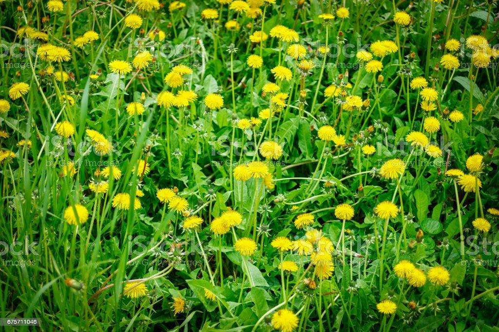綠色和黃色的草地背景 免版稅 stock photo