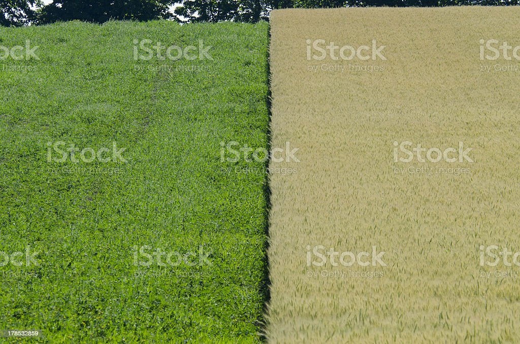 Green and yellow plants royalty-free stock photo