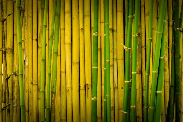 green and yellowish brown of bamboo wall - wood texture zdjęcia i obrazy z banku zdjęć