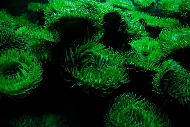 Green Anemones stock photo