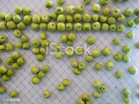 green apples hanging on wall net. modern design solution for creative kitchen zone