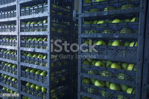 Fresh green apples ready to transport in black crates in warehouse