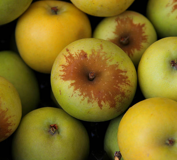 Green apples. stock photo