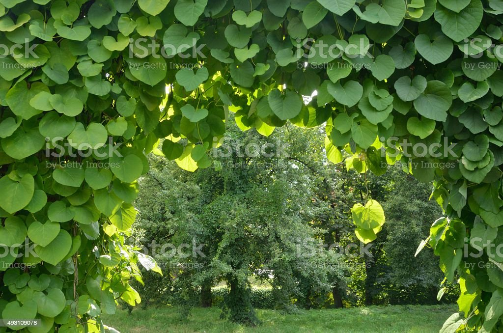 Green archway in a garden. stock photo