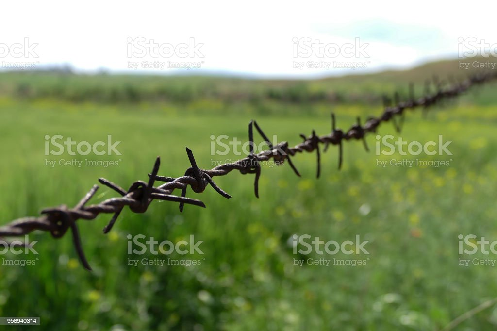 green area, rusty barbed wire fence, stock photo