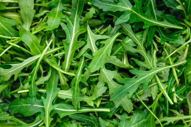 녹색 arugula - 아루굴라 뉴스 사진 이미지