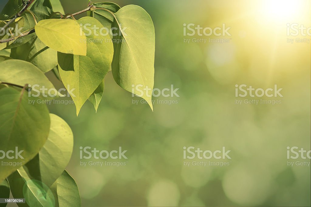 Green autumn background with shallow focus royalty-free stock photo
