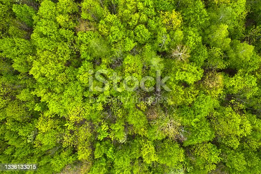 istock green autumn or spring forest. View from the drone 1336133015