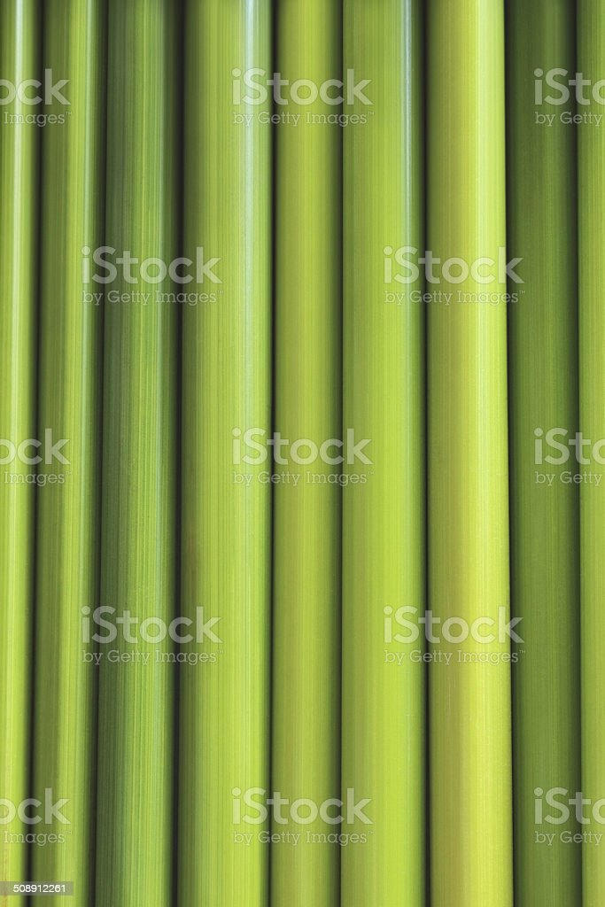 green back ground of sedge stock photo
