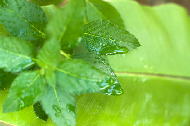 green background , natural leaves stock photo