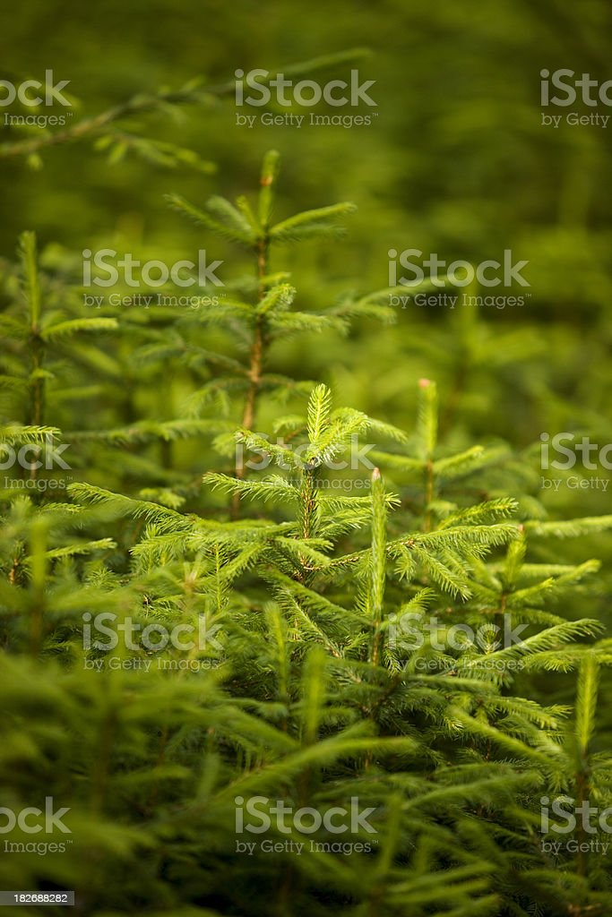 Green background. royalty-free stock photo
