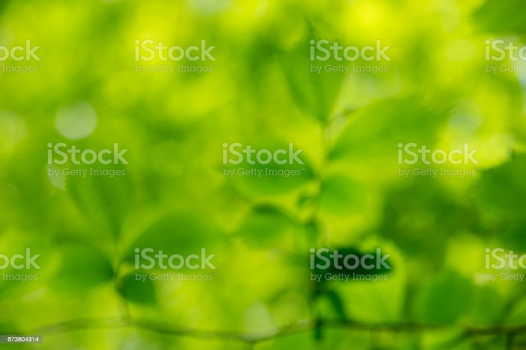 green background photo libre de droits