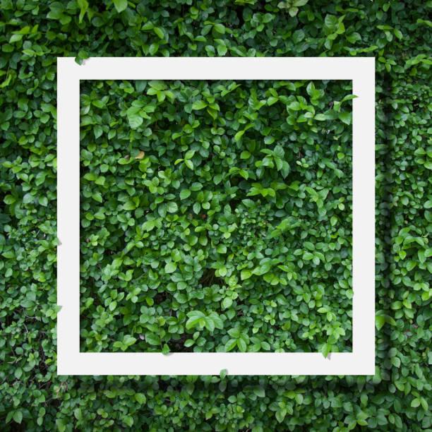 Green background picture id691572696?b=1&k=6&m=691572696&s=612x612&w=0&h=b73gsu5hpjdyy fu5inp9erohuvh1uamfueflfy4qrs=