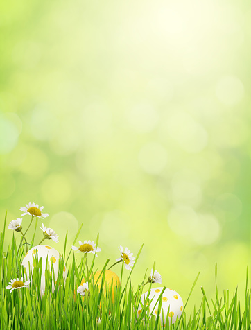 Green blurred background with grass, daisy flowers and Easter eggs in a bottom