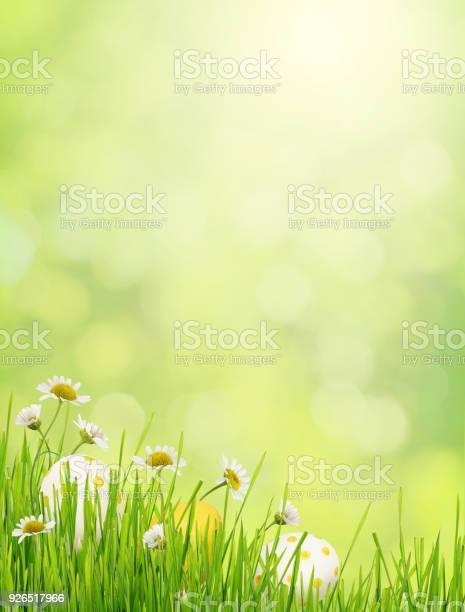 Green background with grass daisy flowers and easter eggs picture id926517966?b=1&k=6&m=926517966&s=612x612&h=mzw5or4yiq0v1z56o4oierqttql9nvxatfznnaxcfoy=