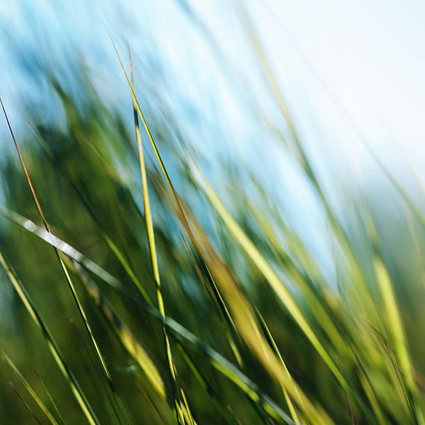 grüner hintergrund mit geringe tiefenschärfe - schöne osterbilder stock-fotos und bilder