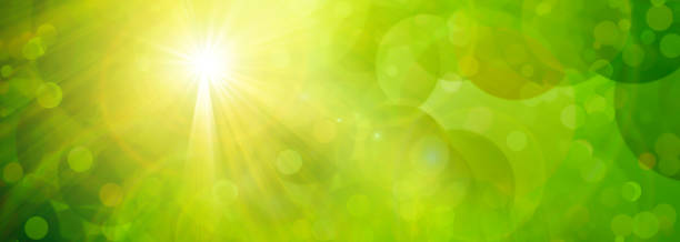 green background with sun - kelly green stock pictures, royalty-free photos & images