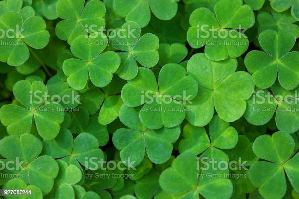 Green background with threeleaved shamrocks st patricks day holiday picture id927087244?b=1&k=6&m=927087244&s=612x612&h=hcyucdltkoyqvy7svzw gnm3zn7kgcbtfqxmdlg1phu=