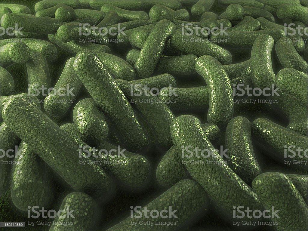 Green bacteria royalty-free stock photo