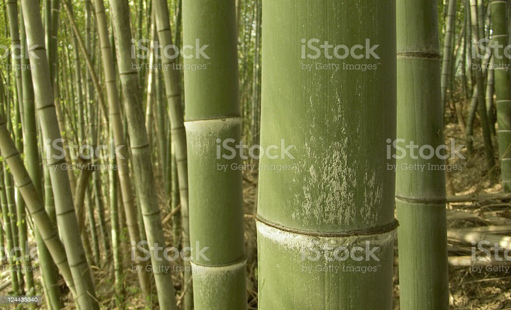 green bamboo background royalty-free stock photo