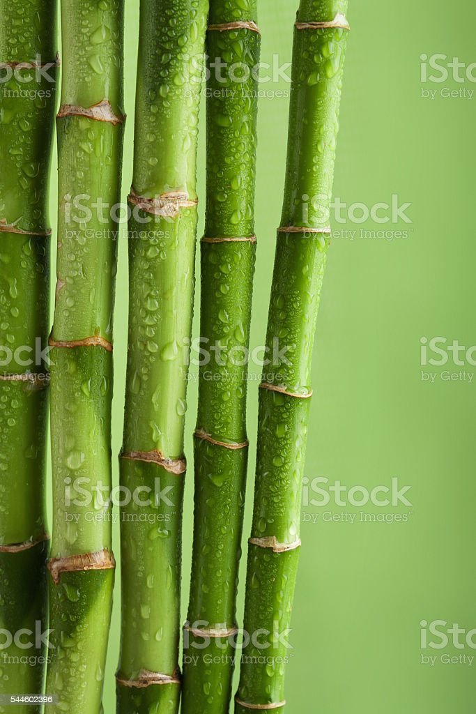 green bamboo background with water drops stock photo