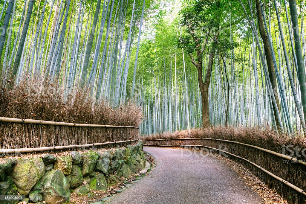 Green bamboo forest in Asia and road stock photo