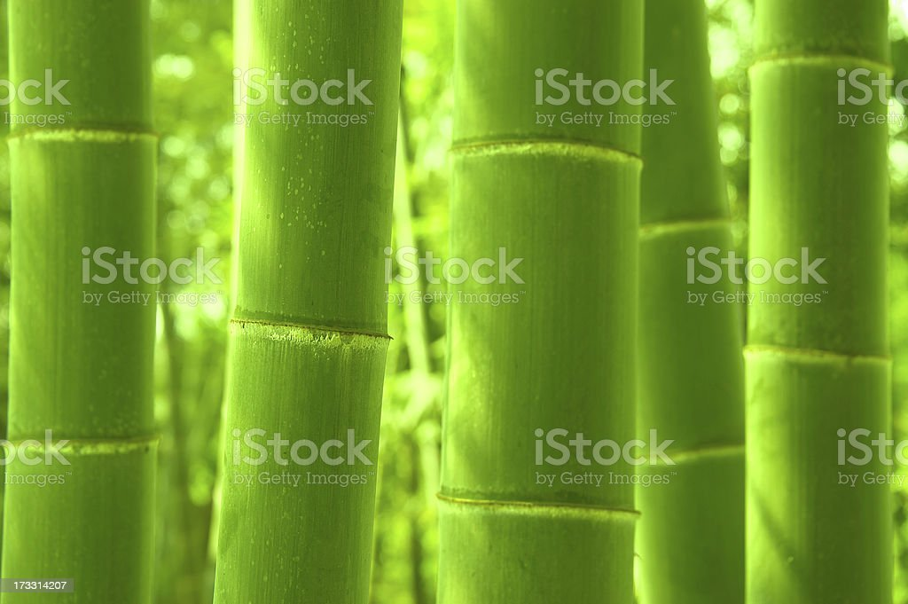 Green bamboo forest royalty-free stock photo