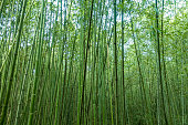 Bamboo forest in nature outside
