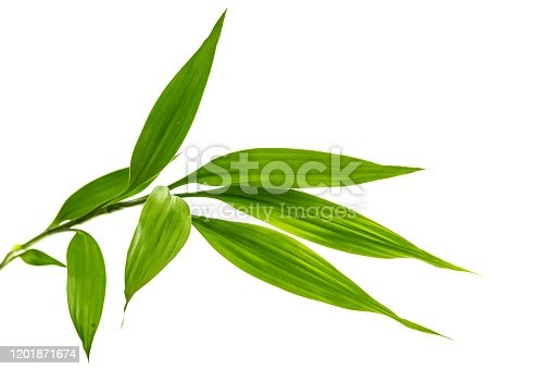 Bamboo Leaf, Bamboo - Plant, White Background, Cut Out