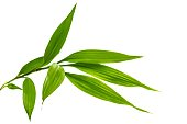 istock Green bamboo isolated on white background 1201871674