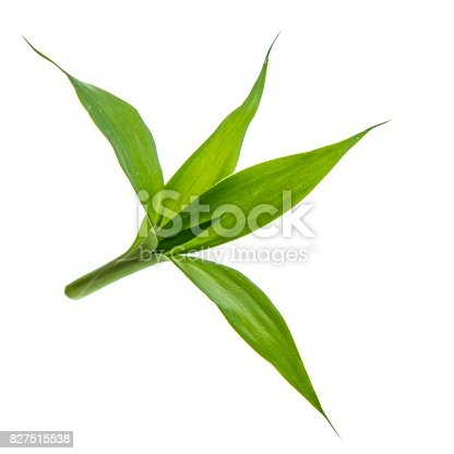 green bamboo isolated on white background