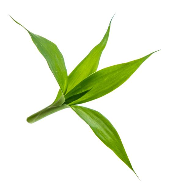 bambou vert isolé sur fond blanc - Photo