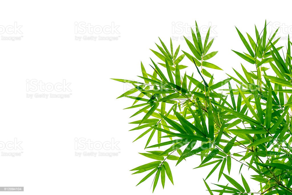 Green bamboo leaves on a white background stock photo