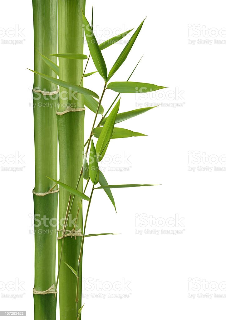 Green Bamboo royalty-free stock photo