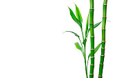istock Green bamboo stems and leaves on white background. Banner with copy space 1262488051