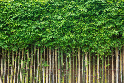 Green Bamboo Wall Stock Photo - Download Image Now - iStock