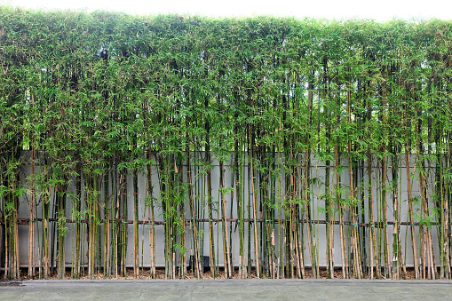 Green Bamboo Wall Plant For Background Texture Stock Photo