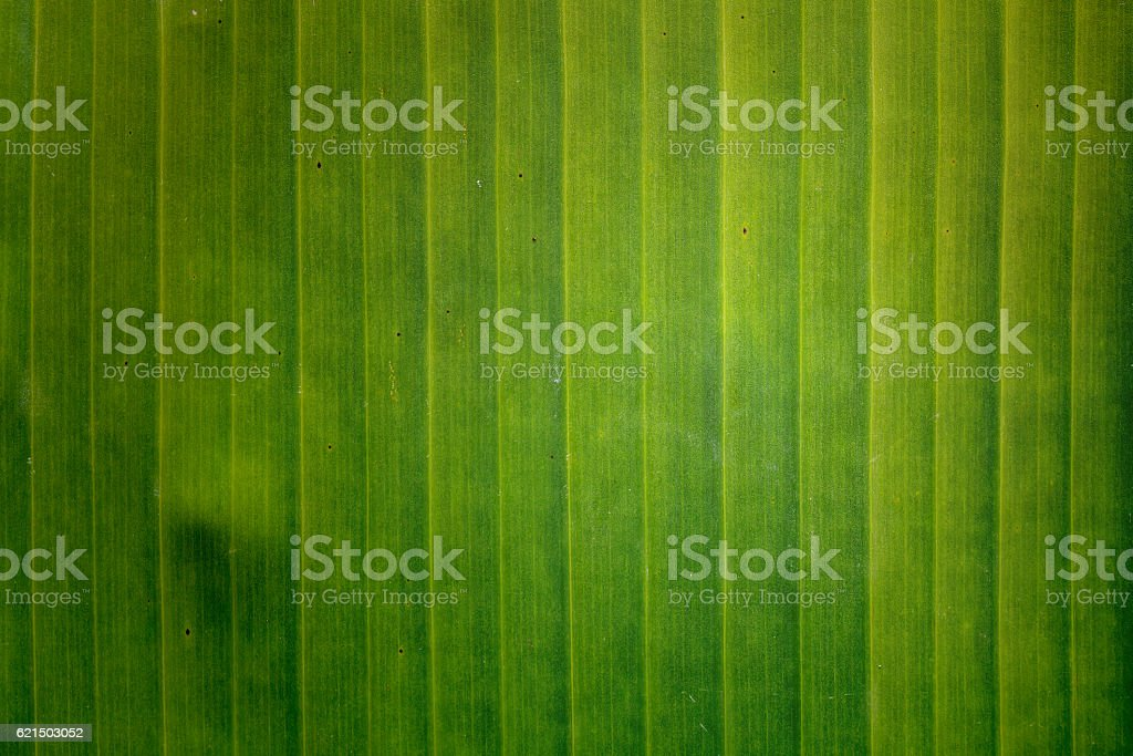 Green banan leaf background photo libre de droits