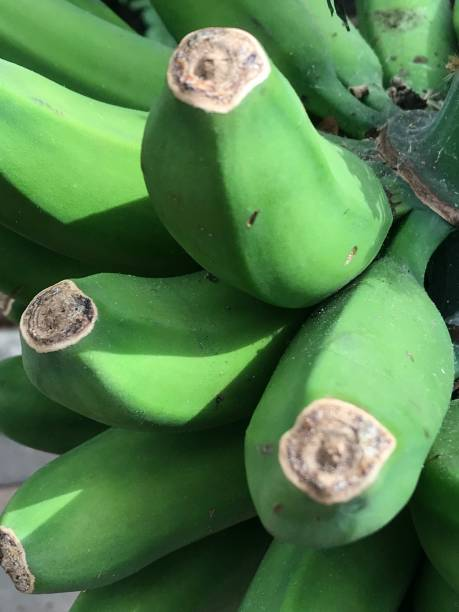 Green Banana Bunch stock photo