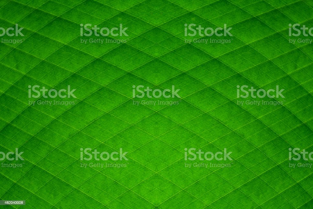 green banana leaf diamond stripes abstract background stock photo