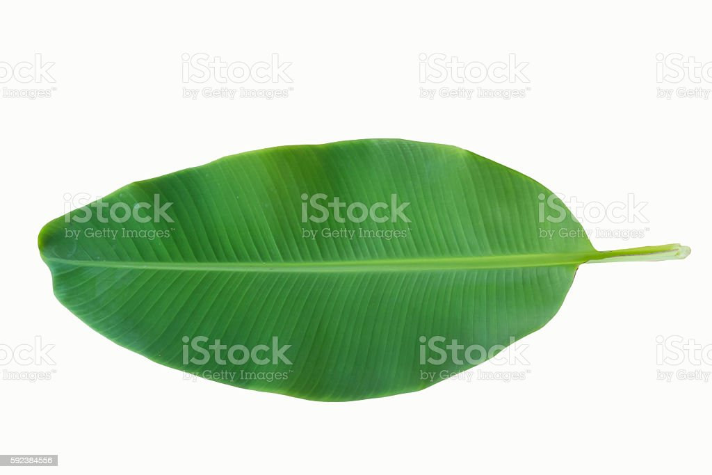green banana leaf isolated on white background stock photo