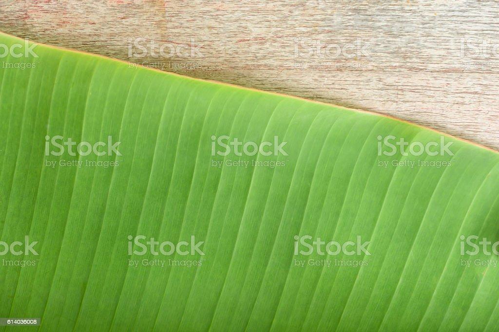green banana leaf stock photo