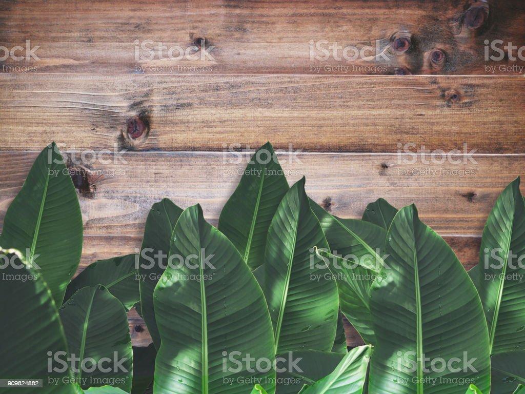 folhas de bananeira verde sobre parede de madeira marrom - foto de acervo
