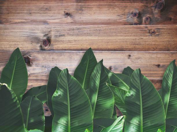 grüne Banane Blätter über Braun Holzwand – Foto