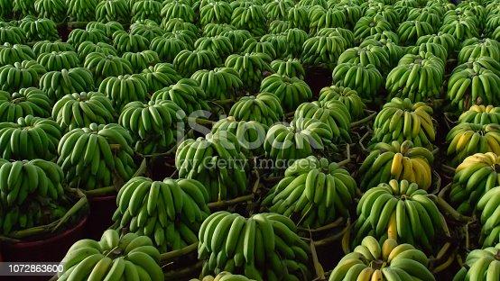 Green bananas in wholesale fresh market