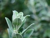 Leaf, Plant, Serbia, Tree, Green Color